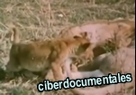 la reproduccion animal